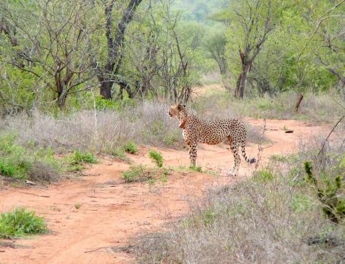 Carnet d'images d'Afrique du Sud : Tshukudu