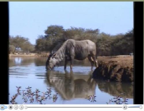 Programme d'entrainement : vivre le Botswana dans son lit :)