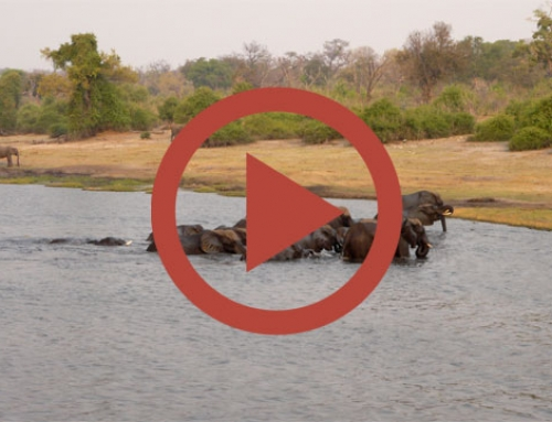 Elephants show [Vidéo]
