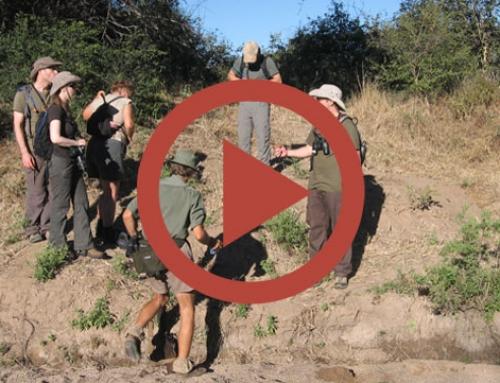 Zimbabwe 2010 : le teaser [Vidéo]
