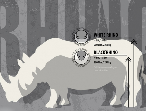 Le rhino expliqué par Earth Touch