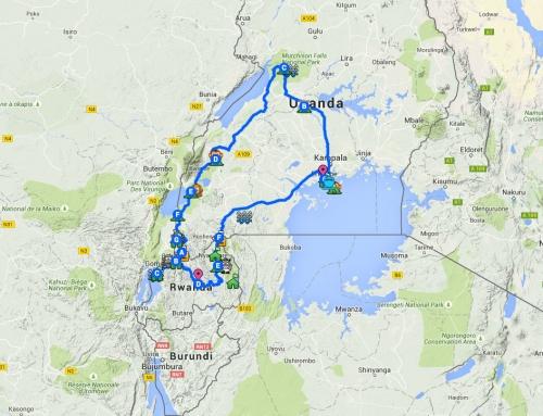 Itinéraire final en Ouganda et au Rwanda : gorilles et chimpanzés, option rhino, lion, hippo & co !