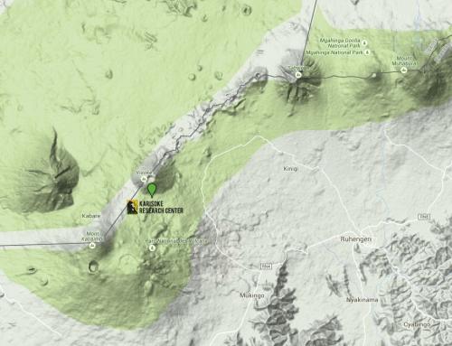Un petit détour par Karisoke et le sanctuaire de Dian Fossey au Rwanda