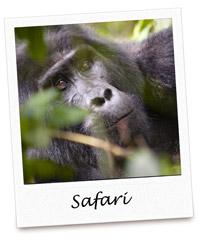Pola NKU Safari