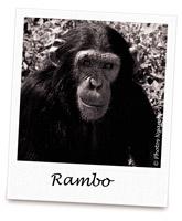 C RAMBO