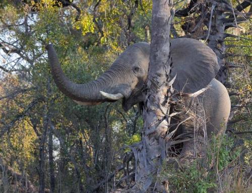 Mission léo : Le jour d'avant (Victoria Falls)