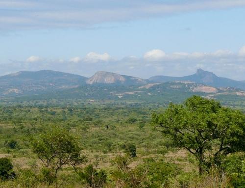 Carnet d'images d'Afrique du Sud : le Kruger (2)