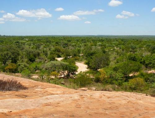 Carnet d'images d'Afrique du Sud : le Kruger (1)