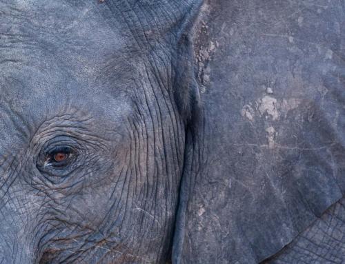 Botswana côté brousse : Chobe National Park