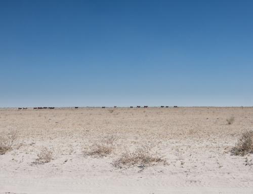 Bostwana côté désert : Central Kalahari, Sunday Pan (Jour 1)
