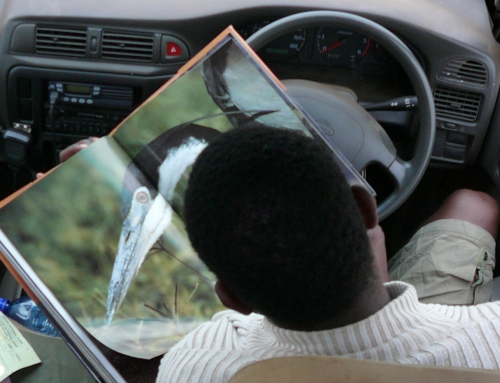 Carnet d'images de Tanzanie : Serengeti