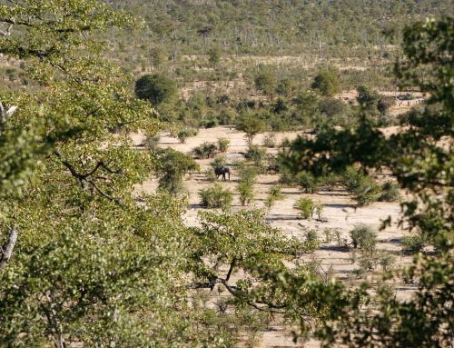 Mission d'écovolontariat : Ici aussi, les éléphants sont pas toujours commodes …