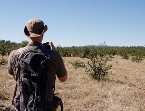 Mission d'écovolontariat : Toujours pas l'ombre d'un rhino …