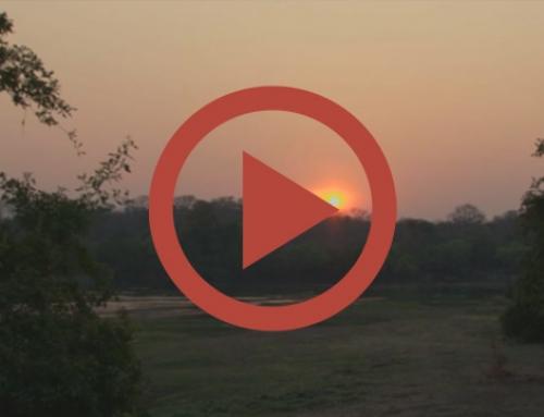 Le soleil se lève sur Mayukuyuku [Vidéo]