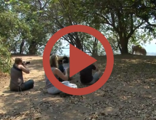 Quelques minutes avec nous en Zambie et au Zimbabwe … [Vidéo]