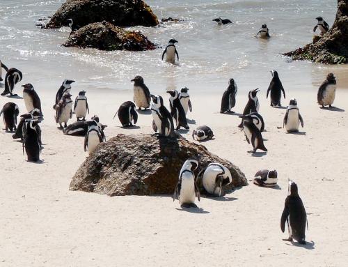Carnet d'images d'Afrique du Sud : Le Cap