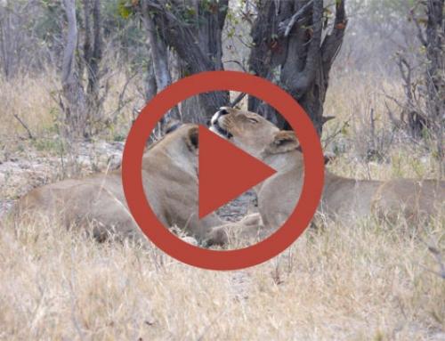 Pause bisous [Vidéo]
