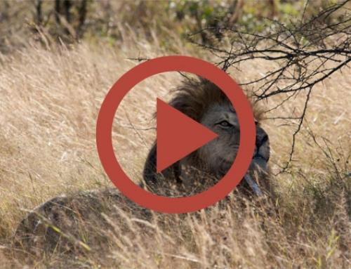 Impala tapas party [Vidéo]