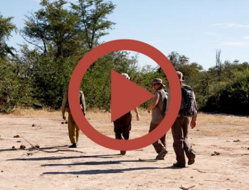 A walk in the brousse [Vidéo]