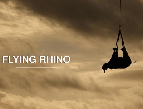 Les rhinos peuvent voler …
