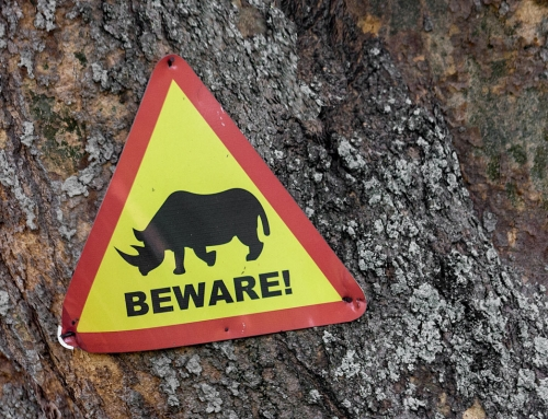 Peut-on encore voir des rhino en Ouganda ?
