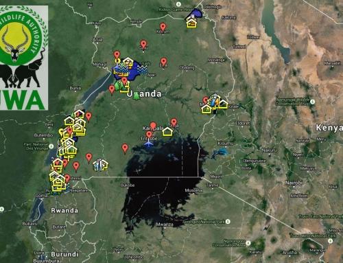 Tout savoir sur les parcs nationaux d'Ouganda avec l'UWA