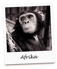 C AFRIKA 200
