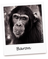 C BARON