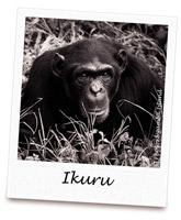 C IKURU
