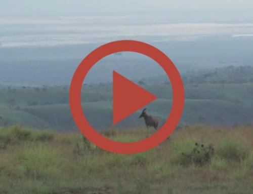 Au sommet de l'Akagera [Video]