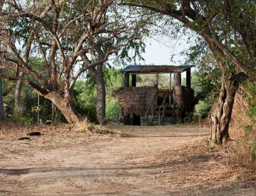 Carnet d'images du Bénin : Le parc de la Pendjari
