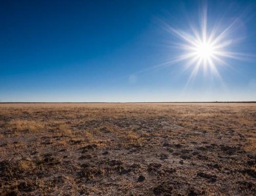 Bostwana côté désert : Central Kalahari, Piper Pan (Jour 3)