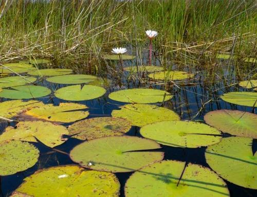 L'Okavango vu du ciel