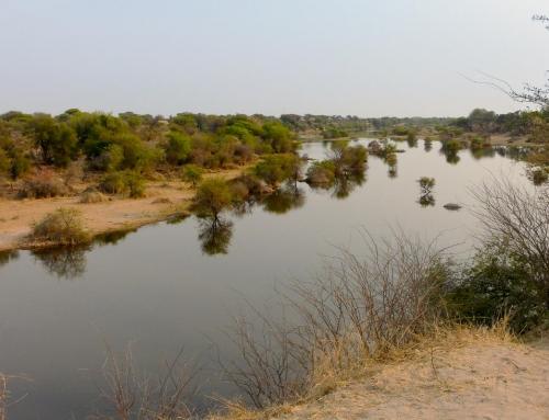 Balade le long de la rivière Boteti