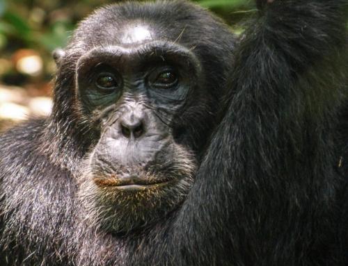Au coeur de la forêt tropicale de Kibale