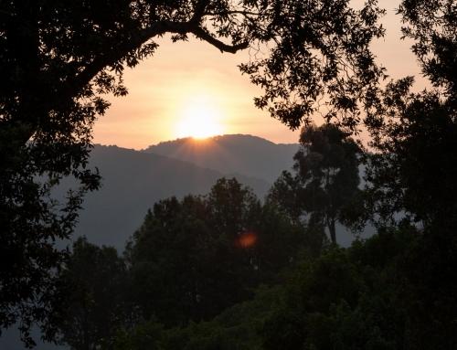 De la forêt ougandaise de Bwindi aux volcans du Rwanda