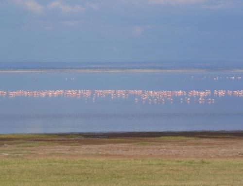Carnet d'images de Tanzanie : Tarangire & Manyara