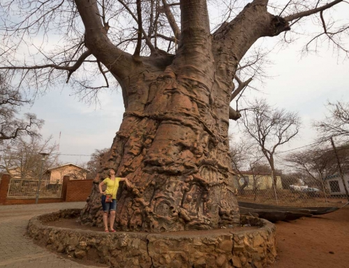 Mission repos : Kasane, Botswana, 3 jours d'arrêt !