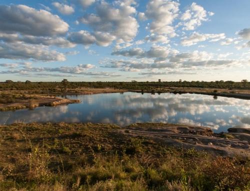 Mission d'écovolontariat : Comptage de 24h à Masuma Dam (1)