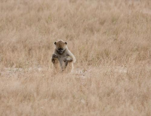 Retour sur le parc du Hwange (Zimbabwe)