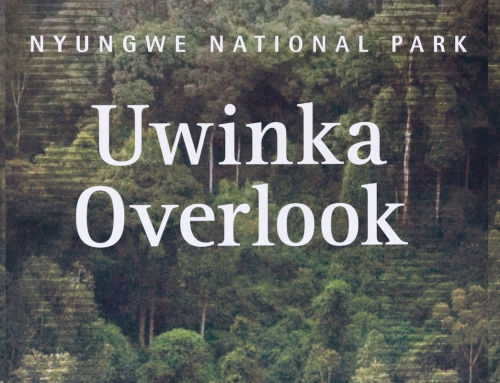 Nyungwe Forest, à vue de chimpanzé