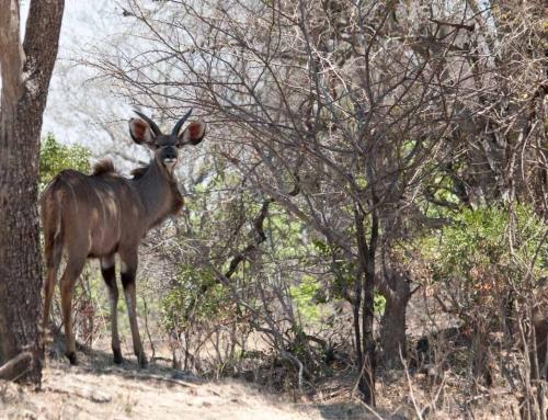 Zambie : En route pour les Busanga Plains !