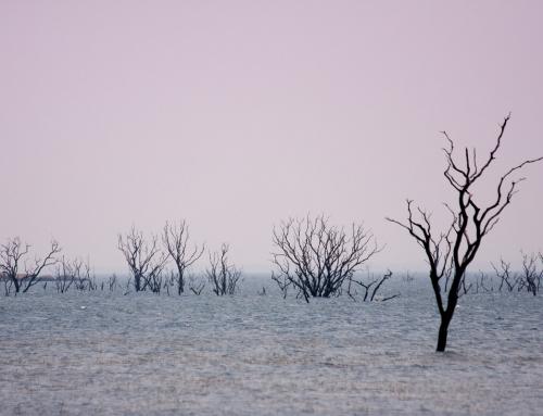 Zambie : Dans les dédales de sable du sud Kafue