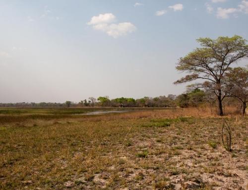 Zambie : Sur la piste des guépards … et des tsé-tsé (épisode 3)