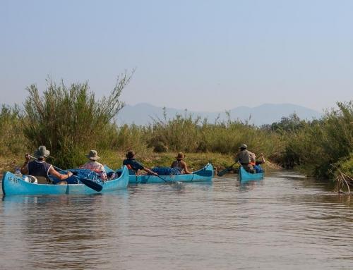Canoë sur le Zambèze : Les caprices du vent (et donc du fleuve)