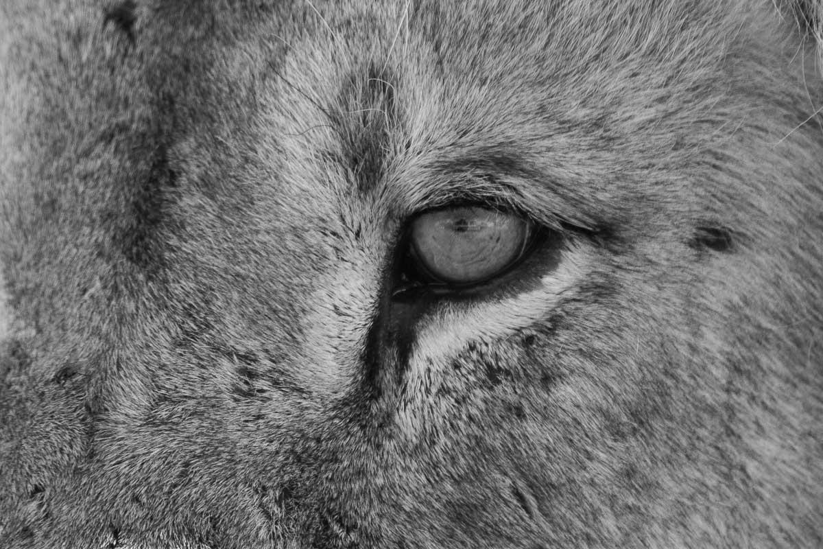 Galerie photo des lions